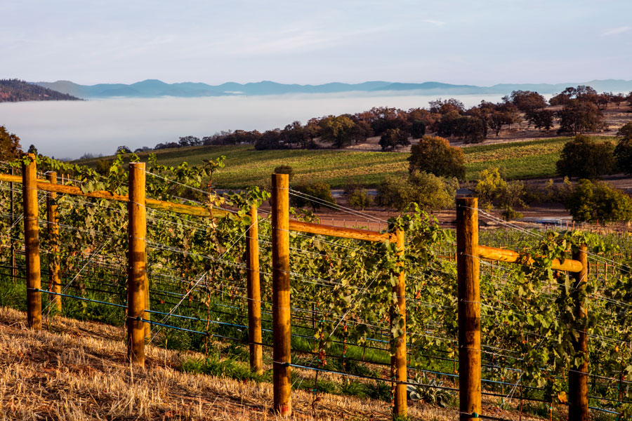 The Rogue Valley wine region
